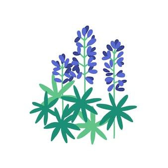 Lupine flache abbildung. lila wiesenblumen isoliert auf weiß