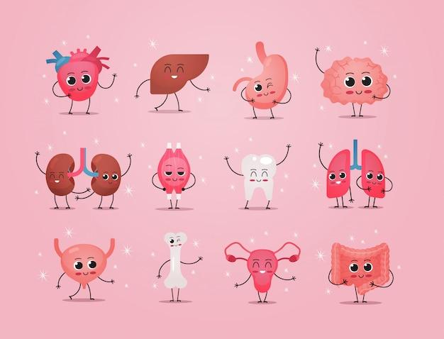 Lustige anatomische maskottchen nieren muskel zahn lungen herz leber magen gehirn knochen knochen verdauungssystem zeichen niedlichen menschlichen körper innere organe anatomie gesundheitswesen medizinisches konzept horizontal