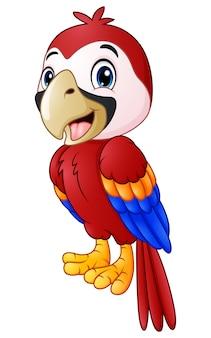 Lustige macaw vogel cartoon