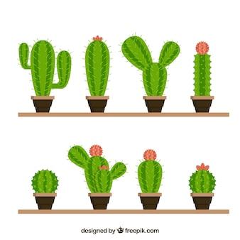 Lustige vielfalt von schönen kaktus