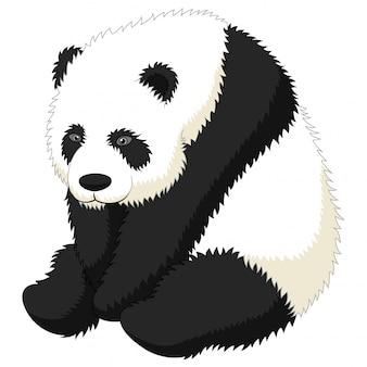Lustiges erwachsenes sitzen des großen pandas der karikatur
