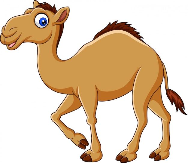 Lustiges kamelrennen der karikatur