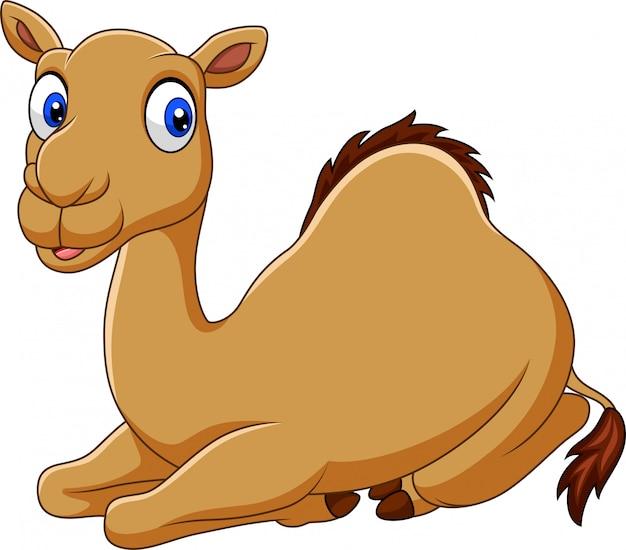 Lustiges kamelsitzen der karikatur