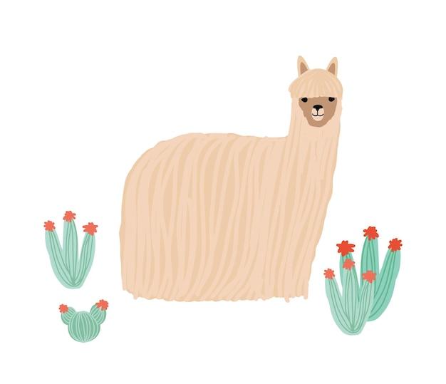 Lustiges langhaariges alpaka lokalisiert auf weißem hintergrund. entzückendes inländisches südamerikanisches tier, das unter kakteen steht. andenvieh. farbige kindische vektorgrafik im flachen cartoon-stil.