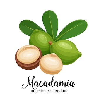 Macadamia-nüsse im cartoon-stil