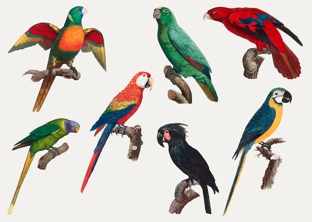 Macaws vintage-design