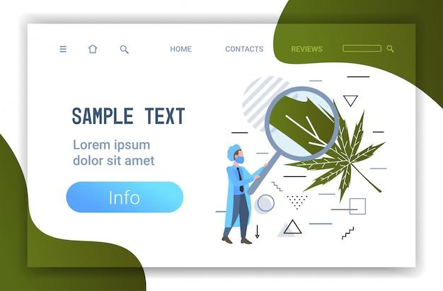 Männlicher forscher unter verwendung der lupe zur überprüfung des medizinischen cannabis-konzepts des marihuana-blatt-gesundheitsapotheken-horizontals in voller länge