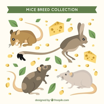 Mäuse sammlung mit käse