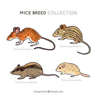 Mäuse sammlung von vier