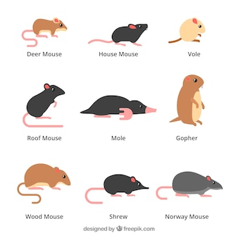 Mäuse-set von neun