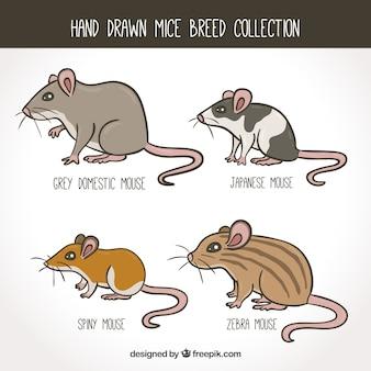 Mäuse-set von vier