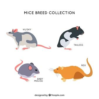 Mäuse züchten satz von vier