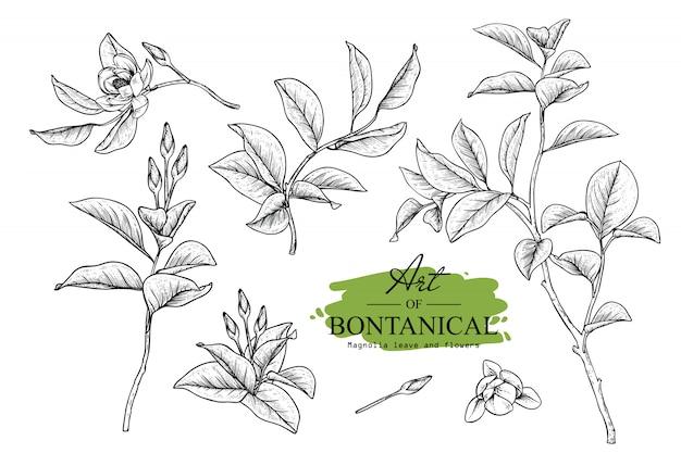 Magnolie blatt- und blumenzeichnungen
