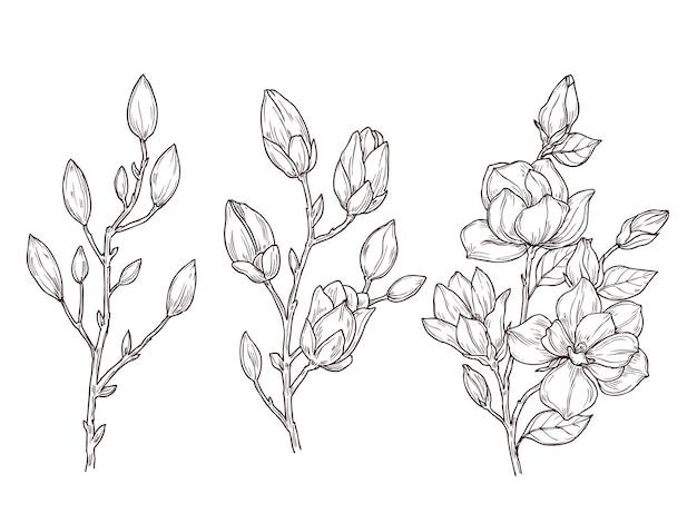 Magnolienskizze. kunstblumenblütenzweig und blumenstrauß. zeichnen romantische frühlingspflanzen, natur, grafische botanische illustration. botanische dekoration der zweigmagnolie