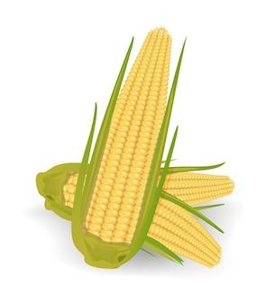 Maiskolbenvektorillustration isoliert
