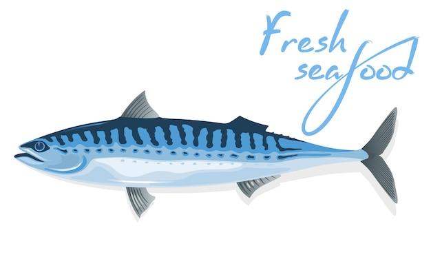 Makrele mit länglichem, stahlblauem, mit gewellten schwarzen linien dorsalem körper und langem