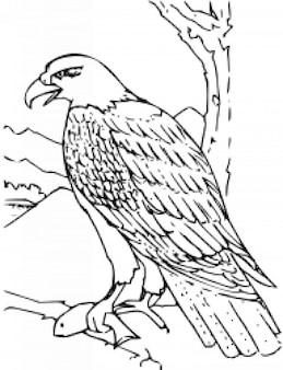 Malbuch weißkopfseeadler