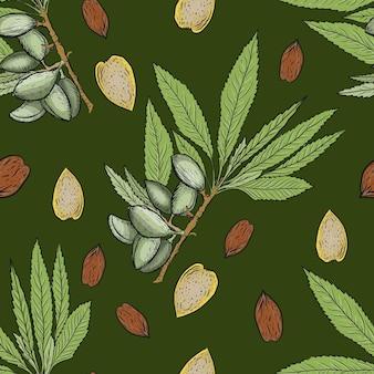 Mandel set nüsse patern nahtlose print textilnahrung nützliche vitamine. pflanzen verlässt natur naturprodukte drucken textilnahrung gesunde vitamine grafische illustration handgezeichneter vektor