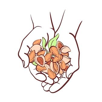 Mandelnüsse in händen. kunstlinienillustration auf weißem hintergrund