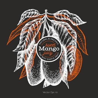 Mango-design. hand gezeichnete tropische fruchtillustration des vektors auf kreidebrett. gravierte früchte. retro exotisches essen.