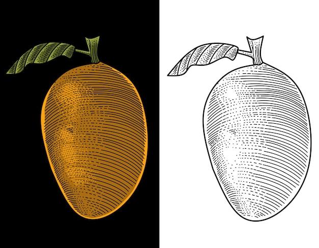 Mango frucht gravur hand gezeichnet
