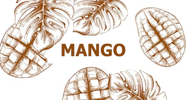 Mango-skizze