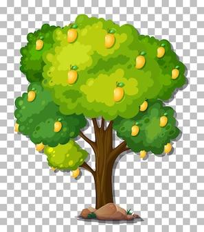 Mangobaum auf transparentem hintergrund