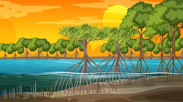 Mangrovenwaldlandschaftsszene bei sonnenuntergang