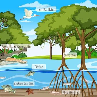 Mangrovenwaldszene und tiere mit markennamen