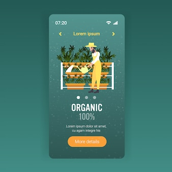 Mann bauer bewässerung cannabis industrie hanf plantage anbau marihuana pflanze drogenkonsum agribusiness konzept smartphone bildschirm mobile app voller länge kopierraum