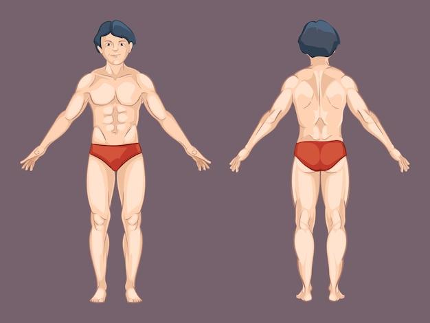 Mann körper in vorderer und hinterer haltung. männlicher mensch, vordere anatomie, sportlich nackt. vektorillustration im karikaturstil