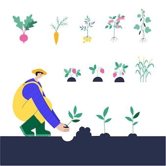 Mann pflanzt kartoffeln, rüben, karotten, tomaten, gurken, erdbeeren, mais.