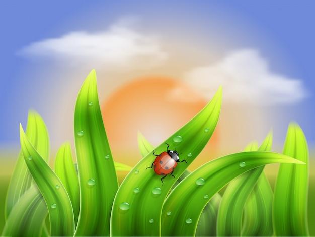 Marienkäfer, der auf das gras auf einem hintergrundsonnenuntergang kriecht