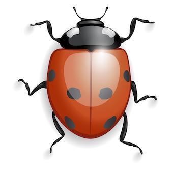 Marienkäfer mit schatten isoliert