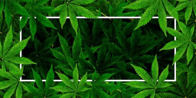 Marihuana- oder hanf-blatthintergrund. realistische darstellung der anlage in der draufsicht.