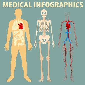 Medizinische infographic des menschlichen körpers