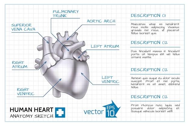 Medizinische kardiologie infografik