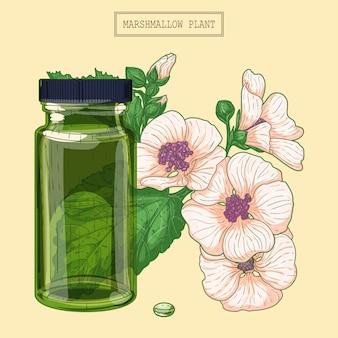 Medizinische marshmallow-blumen und grünes glasfläschchen, handgezeichnete botanische illustration in einem trendigen modernen stil