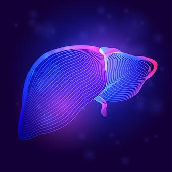 Medizinische struktur der menschlichen leber. umriss der körperteilorgananatomie im 3d-linienkunststil auf dem abstrakten neonhintergrund
