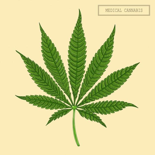 Medizinisches cannabisblatt