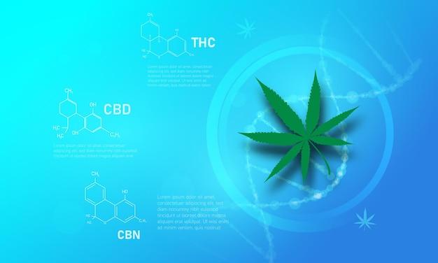 Medizinisches konzept der cannabis-molekularstruktur structure