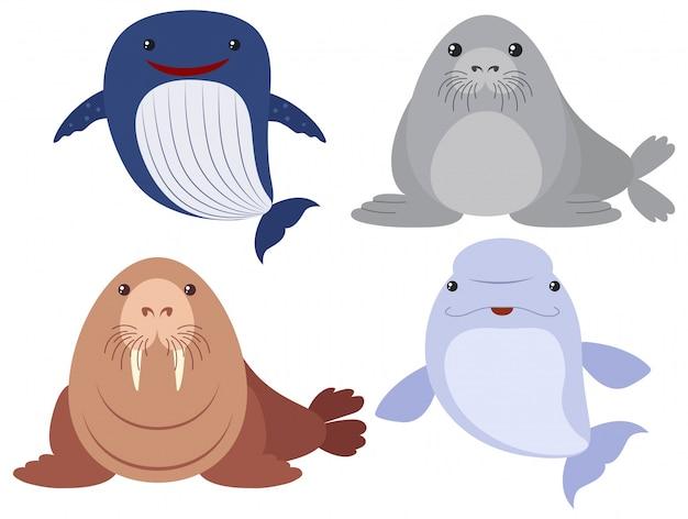 Meer tiere auf weißem hintergrund