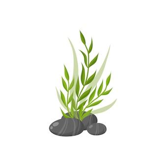 Meerespflanzen und meeresalgen im wasser. algen-vektor-illustration isoliert auf weiss