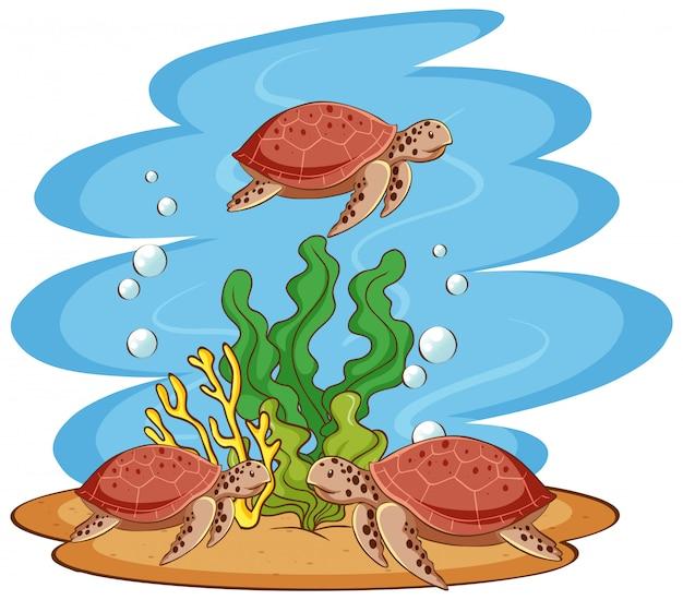 Meeresschildkröten, die im ozean schwimmen