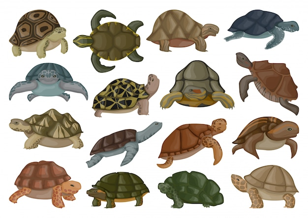 Meeresschildkrötenvektorillustration auf weißem hintergrund.