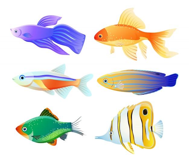 Meerestier-illustration für pädagogisches plakat