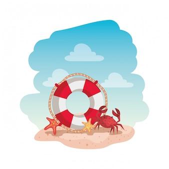 Meerwasserpose mit krabben und seesternen