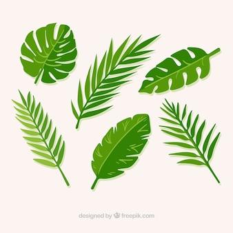 Mehrere grüne blätter von palmen