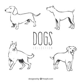 Mehrere handgezeichnete hunde verschiedener rassen
