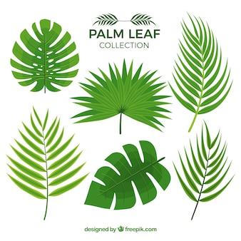 Mehrere palmblätter